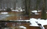 Olsy wczesną wiosną na wycieczce z przewodnikiem w Rezerwacie Ścisłym w Białowieży