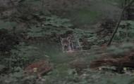 Młode liski w Rezerwacie Ścisłym